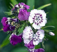 Flowers by mayalenka