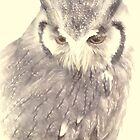 American Eagle Owl 1 by Catherine Hamilton-Veal  ©