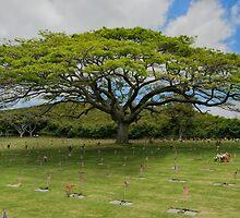 Punchbowl Hawaii by randymir