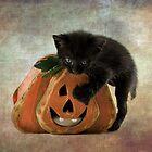 Halloween Blacky  by Nicole  Markmann Nelson