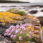 Sea Pinks by Christopher Cullen