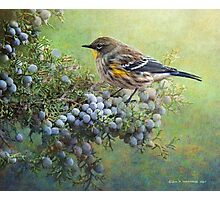 autumn juniper berries and yellow rumped warbler Photographic Print
