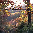 Autumn in the Ozarks #1 by John Carpenter