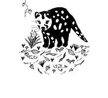 Tiger Quoll Photographic Print