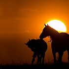 Twilight Mustangs by Kent Keller