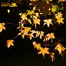 Autumn all aglow by the57man