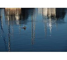 Young Red-Necked Grebe on Silver Photographic Print