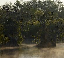 Morning Mist at Everglades National Park by KayakErica