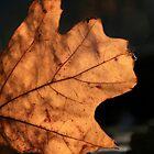 The Oak Leaf by Geno Rugh