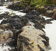 Wild Nature - Rocks, Sand and Seaweed, Great Bernera by BlueMoonRose