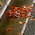 Autumn Leaves by jainiemac