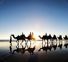 The Camels by Mieke Boynton