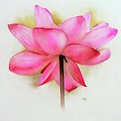 Lotus Flower by Ray Shuell