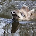 Swimming Tapir by Jo Nijenhuis