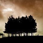Pines in Silhouette  by Karen  Betts