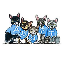 Adopt Shelter Cats Photographic Print