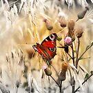 Summer Joy by Danuta Antas
