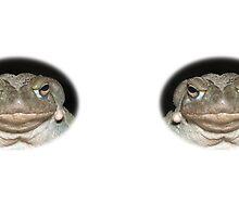 Colorado River Toad by Thomas F. Gehrke