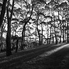 Forest Light by Mandy Gwan