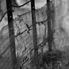 Wire Fence by Mandy Gwan