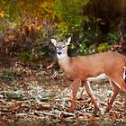 Deer, Me! by Nadya Johnson