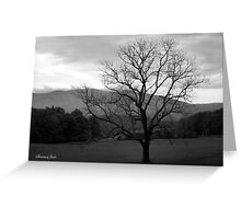 The Tree in the Field at Cades Cove Greeting Card