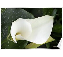Creamy Soft and Gracefully Curved Poster