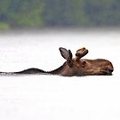 The Following - Algonquin Moose by Jim Cumming