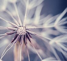 Dandelion Blue by alyphoto