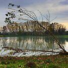 Nostalgic autumn  by annalisa bianchetti