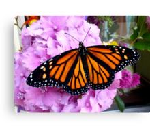Imago Emerged! - Monarch Butterfly - NZ Canvas Print