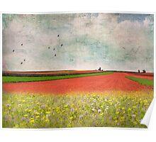 Splendor in the Grass Poster