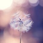 Dandelion Dreams by alyphoto