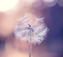 Dandelion Dreams by alyphoto