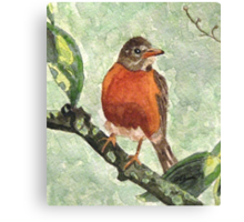 North American Robin Canvas Print