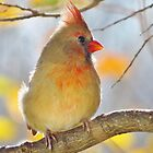 Cardinal in Autumn by lorilee