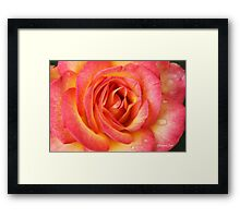 Celebrate Joy with a Perfect Rose! Framed Print