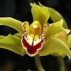Wonderful Green Orchid by Joy Watson