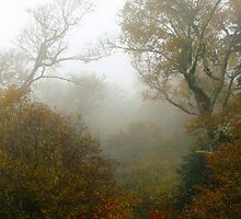 Foggy Scene by Asoka