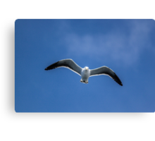 Gull in the sky Canvas Print