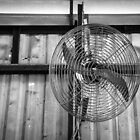 Biggest Fan by Stephen Mitchell