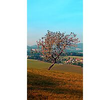 Tree on indian summer afternoon | landscape photography Photographic Print