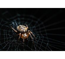 Spider on the Web  Photographic Print