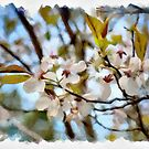 Blossoms by PhotosByHealy