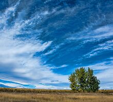 Blue Skies Sing Of Trees by Gregory J Summers