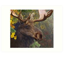 bull moose portrait amid aspen and spruce Art Print
