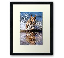 Aqua Dog Framed Print