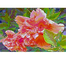Newly trimmed hibiscus bush Photographic Print