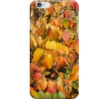 Autumn's Paint Brush iPhone Case/Skin