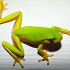 Green Tree Frog by WildestArt